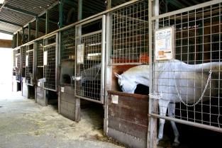 個性豊かな馬たちがお出迎えします!