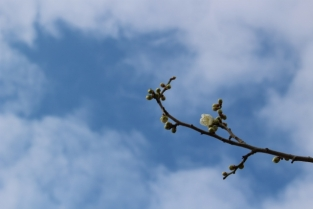 【梅】2月下旬~3月上旬