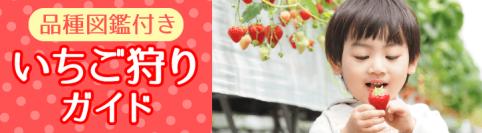 岡山のいちご狩りガイド:いちご品種図鑑付き
