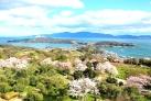 春のオリーブ園