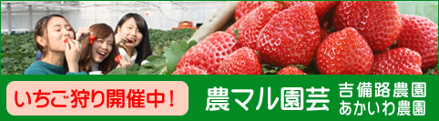【PR】いちご狩り開催中!農マル園芸吉備路農園・あかいわ農園